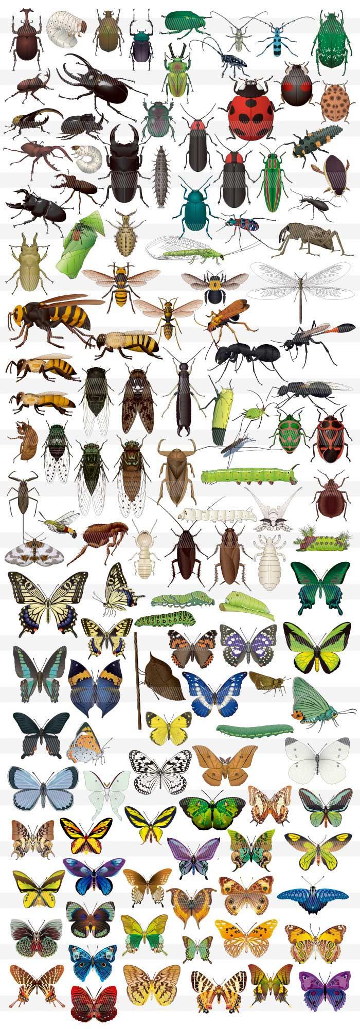 すべての折り紙 折り紙 購入 : リアル昆虫のイラスト|商用OK ...